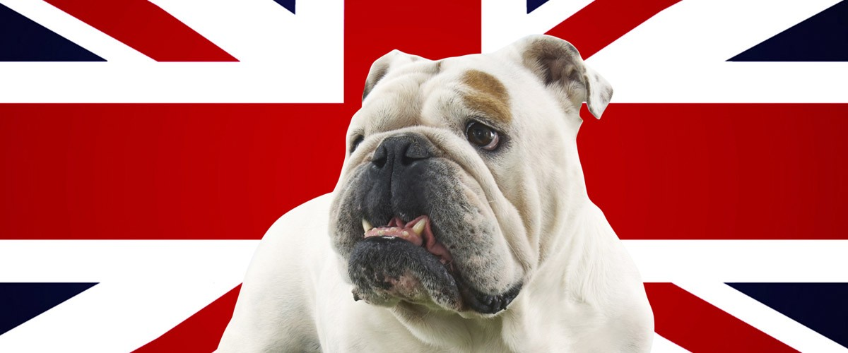 English Pride St George's Day